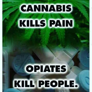 Cannibis kills pain opiates kill people