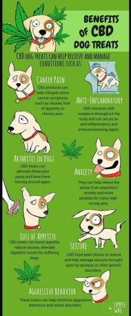 Cute Dog Info Graphic