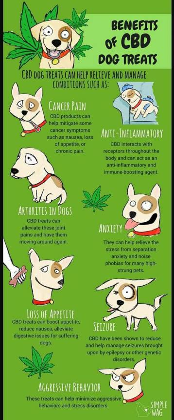 Cute Dog Info Graphic